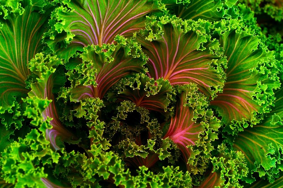 kale, the oral health superfood