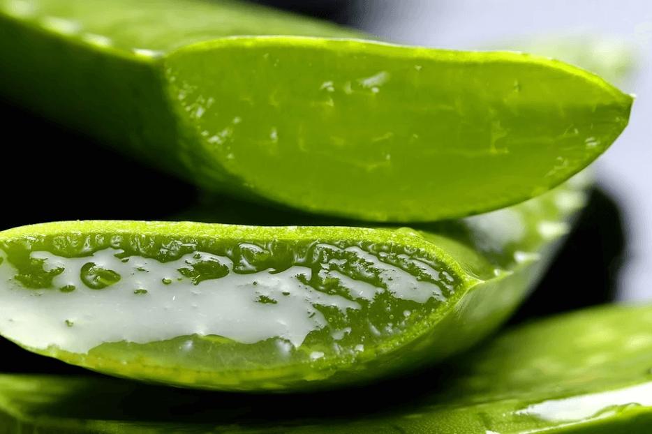 aloe vera for dental health
